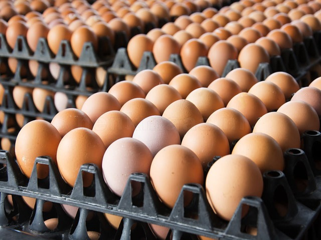 Quality eggs from Poland. The BIGGEST eggs markeplace in Europe