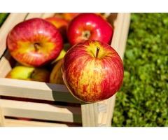 Krajowy Skup Jabłek (KSJ) - eksport polskich jabłek i sprzedaż jabłek za granicę